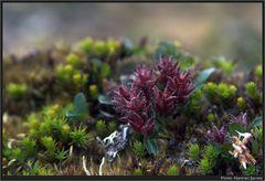 Blühende Bäume in der Arktis...