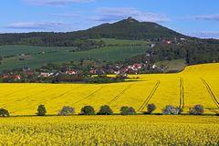 Blühende Bäume und blühende Felder im Böhmischen Mittelgebirge