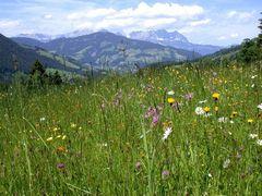 blühende Bergwiese in Tirol