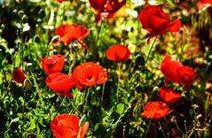 Blühende Gärten..   .120_3778