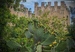 Blühende Kakteen mit Castell CapdePera