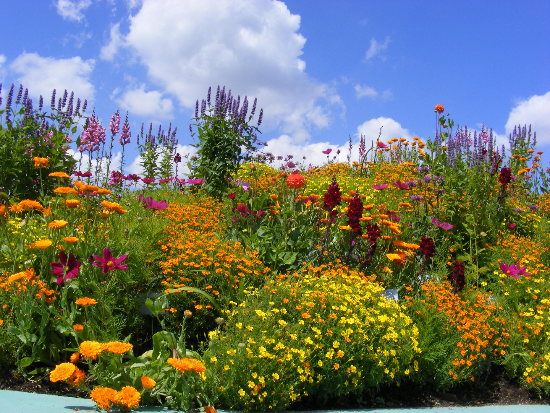 Blühende Landschaften