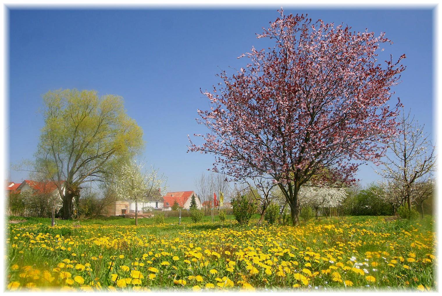 Blühende Landschaften III