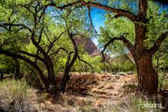Blühende Vegetation in der Steinwüste