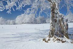 Blühende Winterbäume