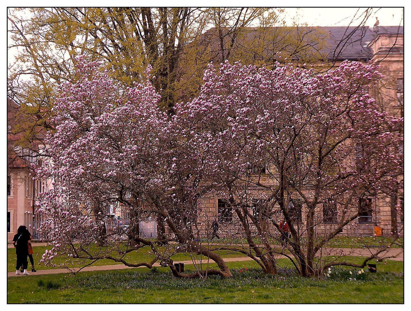 Blühender Baum im Schlosspark