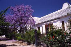 Blühender Baum vor Landhaus in Südafrika