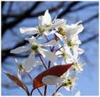 Blühender Frühlingsgruss