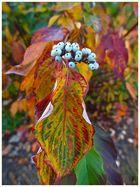 Blühender Herbst