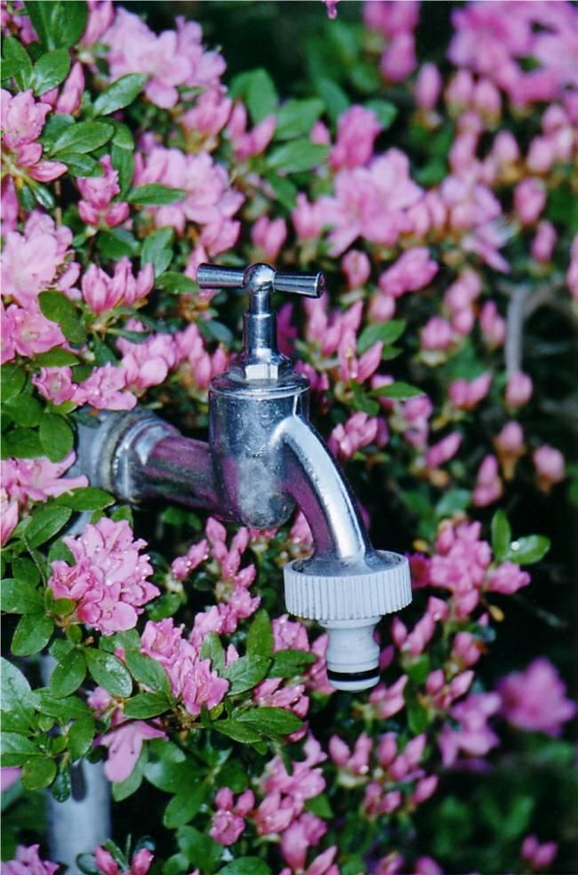 blühender Wasserhahn