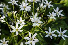 Blühendes aus meinem Garten DSC_1629