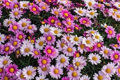Blühendes aus meinem Garten DSC_1630