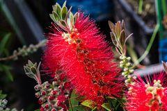 Blühendes aus meinem Garten DSC_1634