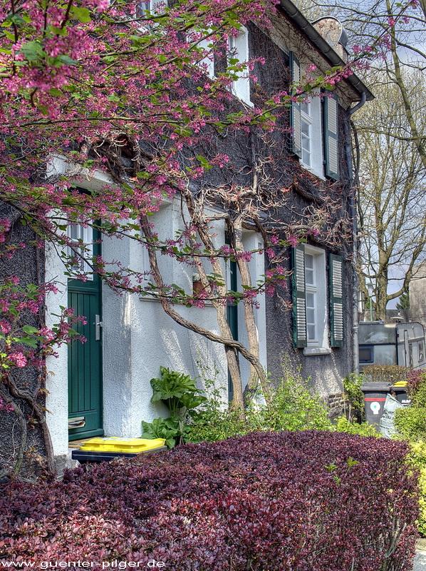 Blühendes Haus