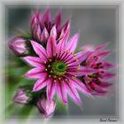 Blühendes Wunder
