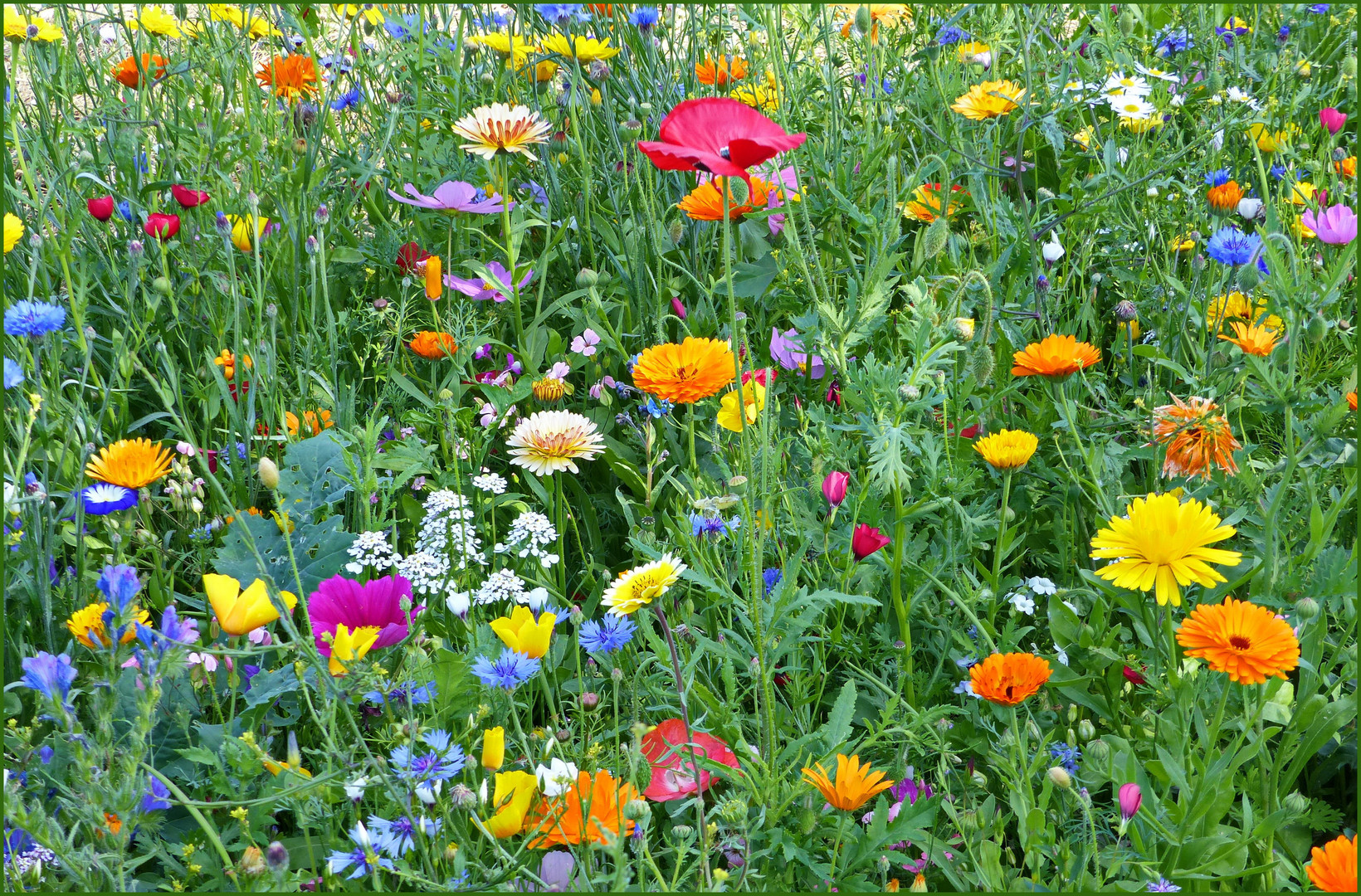 Blühstreifen am Ackerrand
