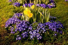 Blühtenbracht in der Wilhelma
