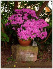 Blühtenpracht in Garten
