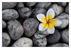 Blümchen auf Stein