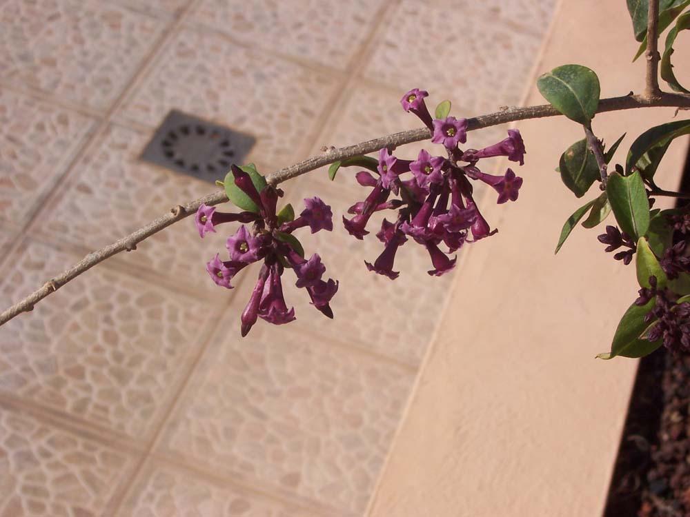 Blümchen - Fuerteventura