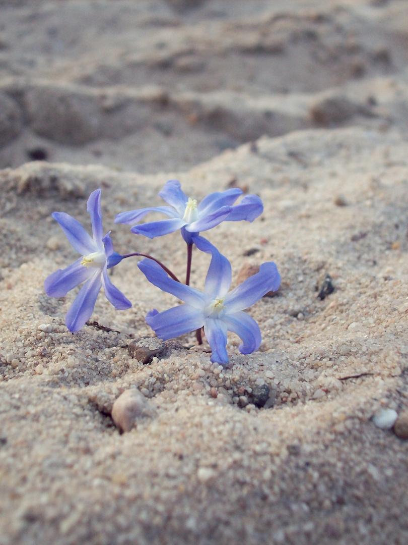 Blümchen im Sand