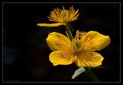 Blümchen in Gelb :-)