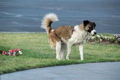 Blümchen mit Hund