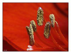 Blümschedetail rot