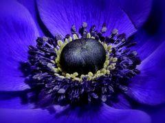 Blue(s) Feelings ...