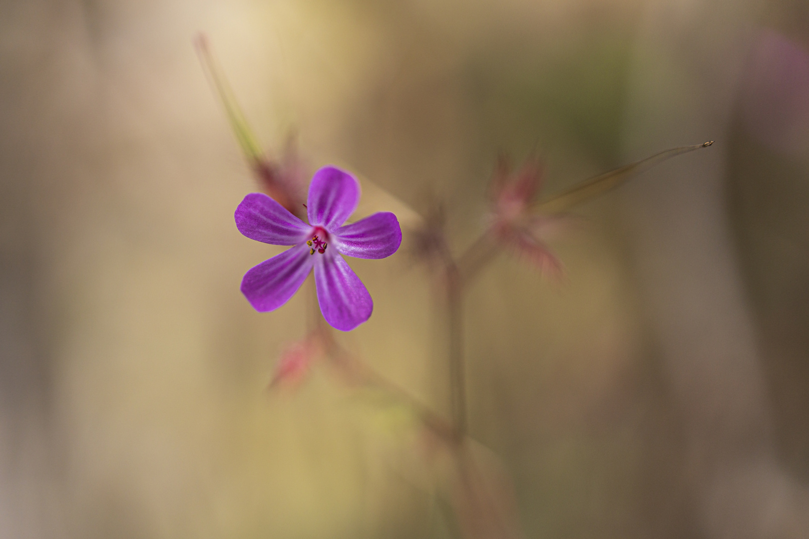 Blüte-0817-2