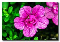 Blüte #2 am Wegrand