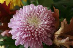 Blüte 4