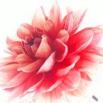 *Blüte*