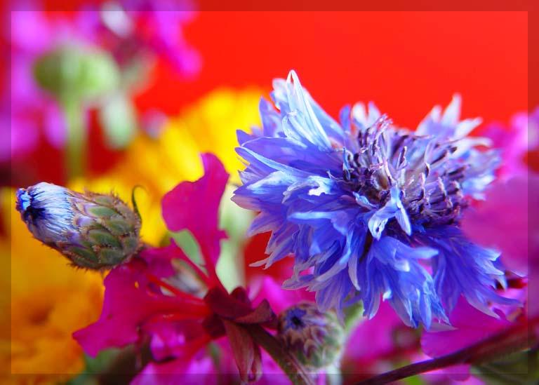 ...Blüte...