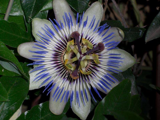 Blüte am Gardasee