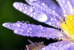 Blüte am Morgen