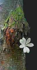 Blüte am Stamm