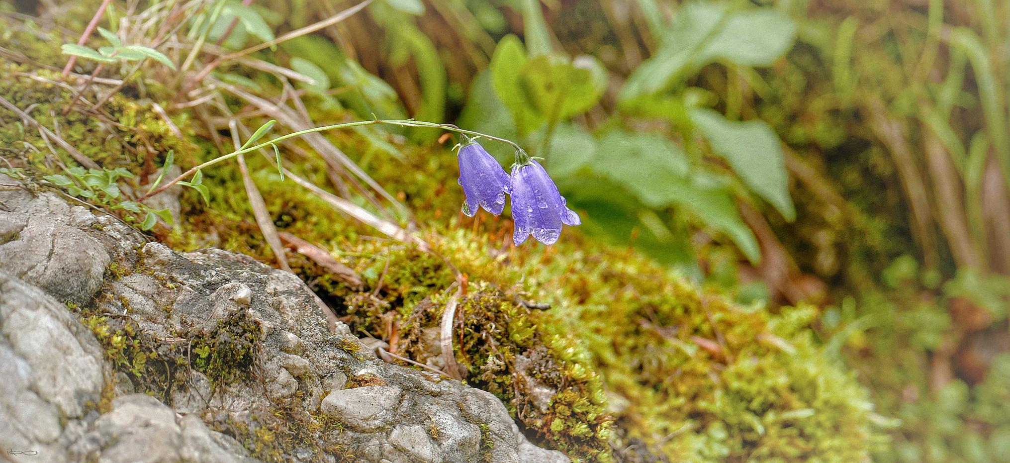 Blüte am Wegesrand