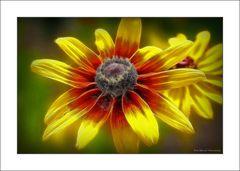Blüte am Wegesrand ....