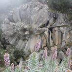 Blüte aus Vulkangestein
