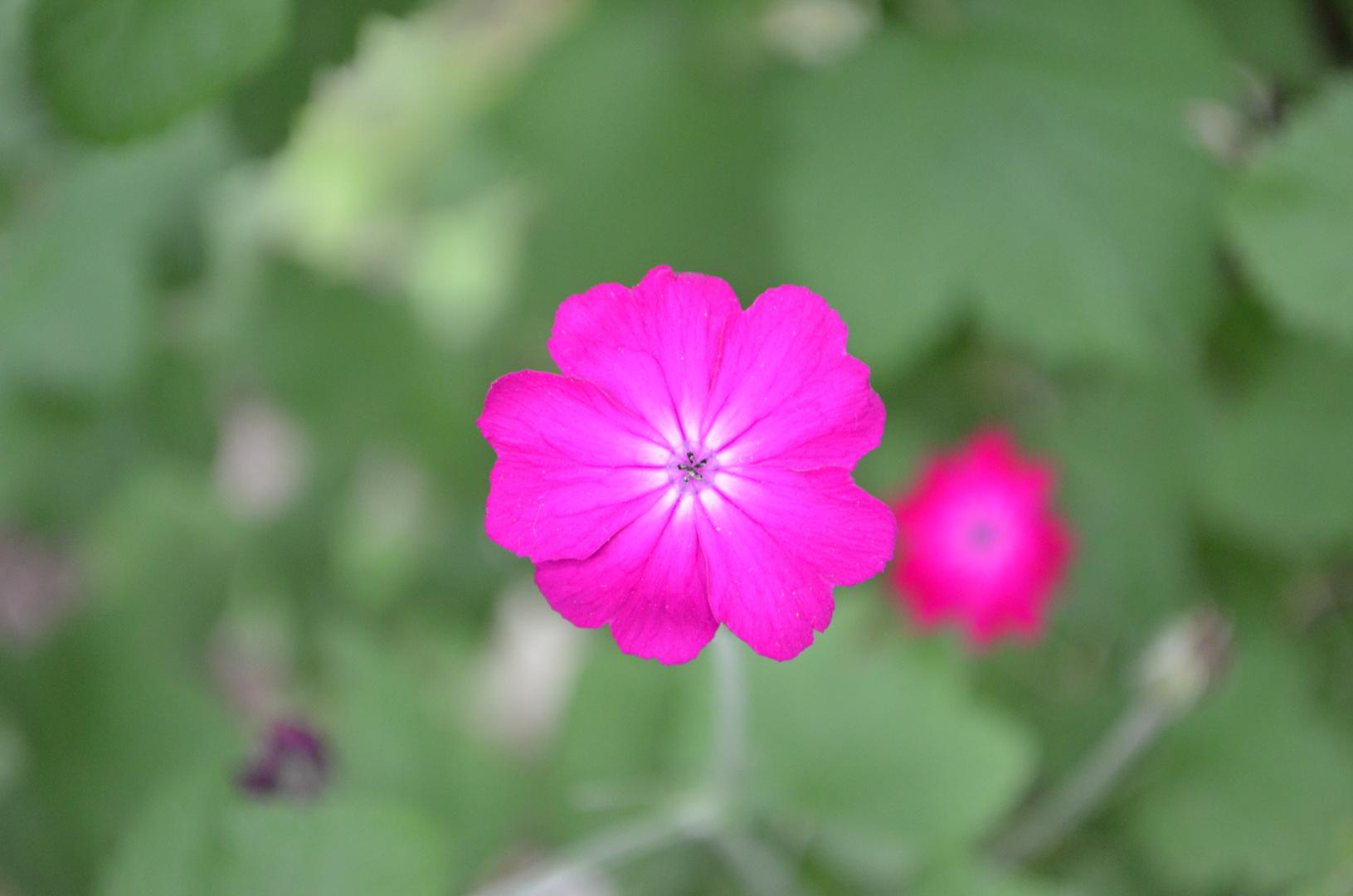 Blüte =)