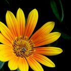 Blüte bearbeitet