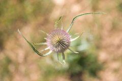 Blüte der Provence