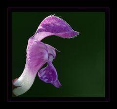 Blüte einer Brennessel