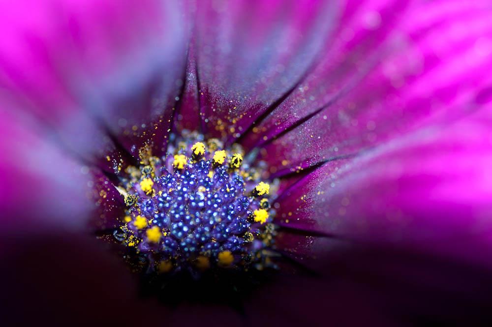 Blüte einmal anders