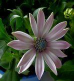 Blüte für das Wochenende