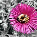 Blüte hat Besuch