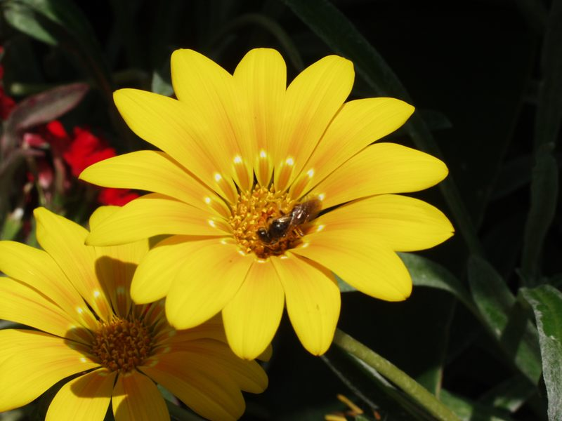 Blüte im Blumenkübel