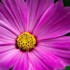 Blüte im Fokus