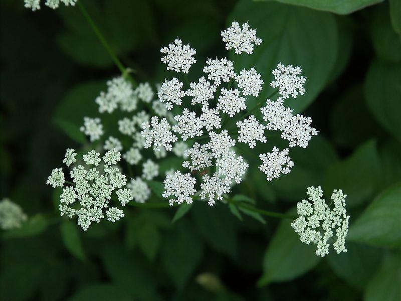 Blüte im Garten 2